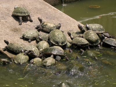 the murky tortoise filled Liberation Pond